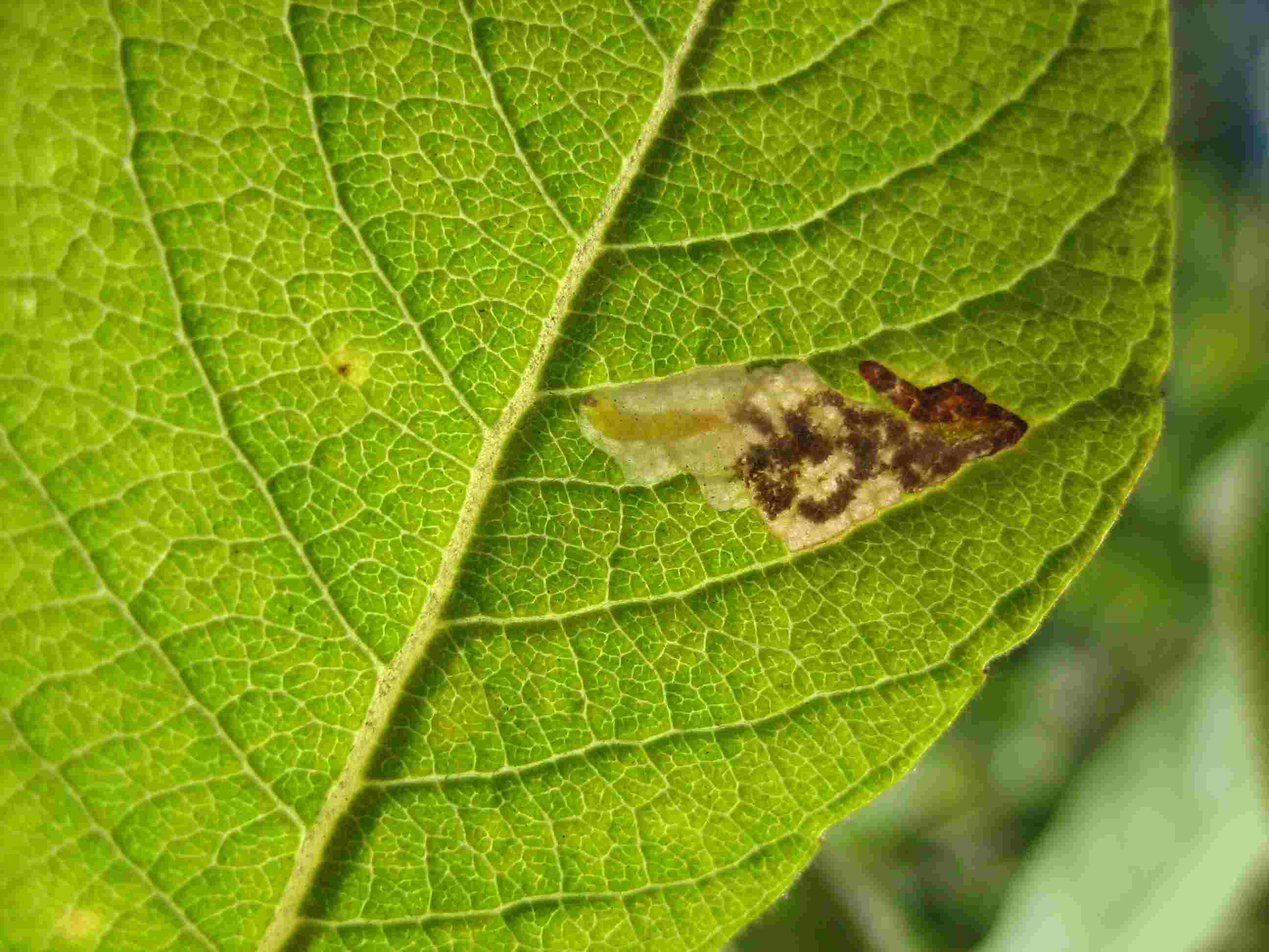Natural Treatment For Aphids On Citrus
